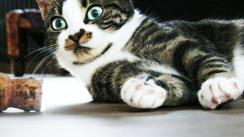 Photographie de chiens & chats 510