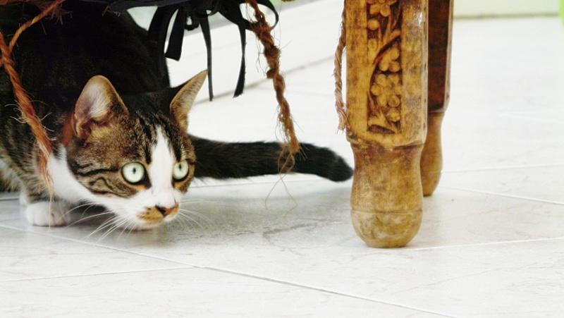 Photographie de chiens & chats 610