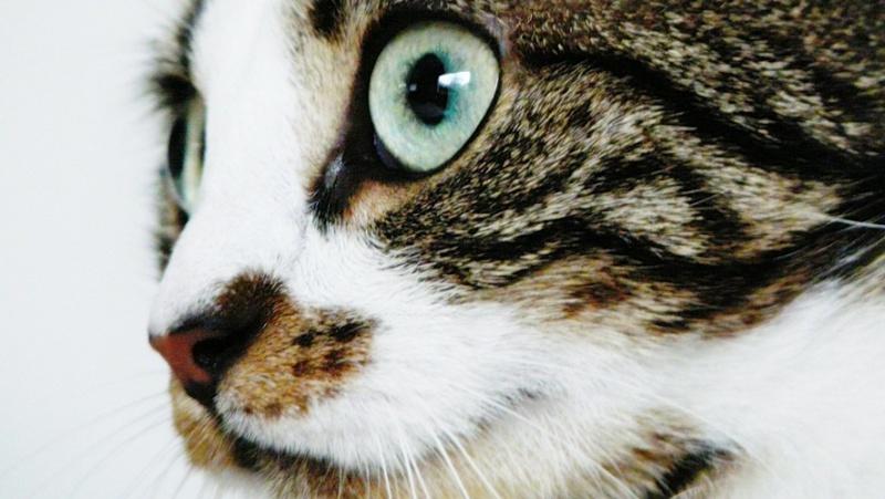 Photographie de chiens & chats 910