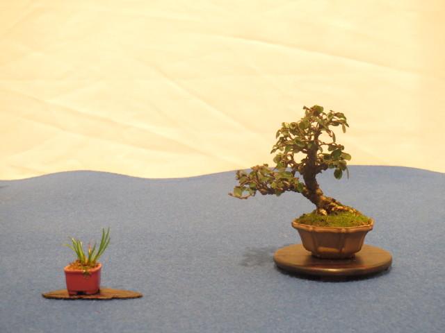 """Trees and details, that caught mye eye, at """"Noelanders"""" Img_1720"""