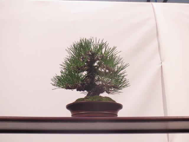 """Trees and details, that caught mye eye, at """"Noelanders"""" Img_1721"""