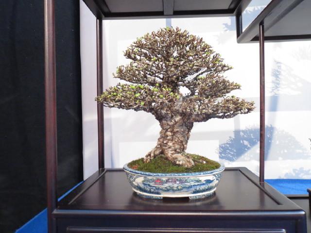 """Trees and details, that caught mye eye, at """"Noelanders"""" Img_1724"""