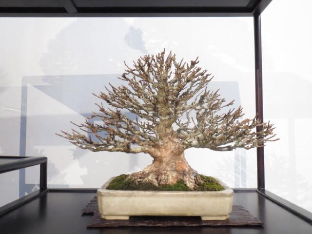 """Trees and details, that caught mye eye, at """"Noelanders"""" Img_1727"""