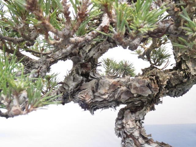 """Trees and details, that caught mye eye, at """"Noelanders"""" Img_1729"""