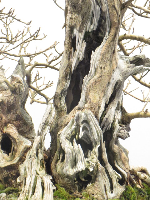 """Trees and details, that caught mye eye, at """"Noelanders"""" Img_1730"""