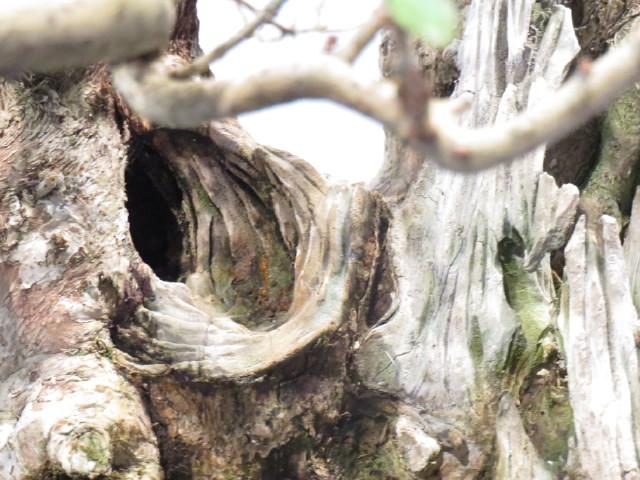 """Trees and details, that caught mye eye, at """"Noelanders"""" Img_1731"""