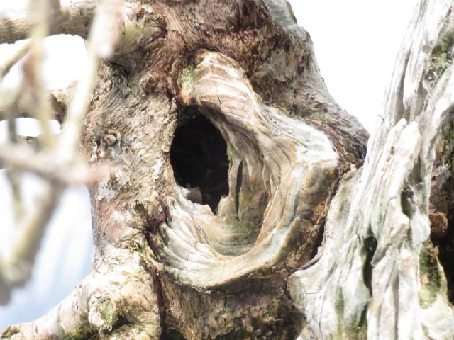 """Trees and details, that caught mye eye, at """"Noelanders"""" Img_1732"""