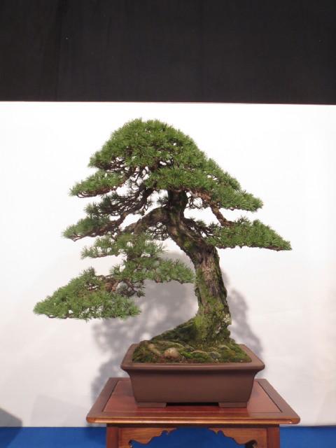 """Trees and details, that caught mye eye, at """"Noelanders"""" Img_1733"""