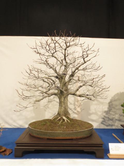 """Trees and details, that caught mye eye, at """"Noelanders"""" Img_1735"""