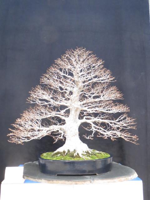 """Trees and details, that caught mye eye, at """"Noelanders"""" Img_1736"""