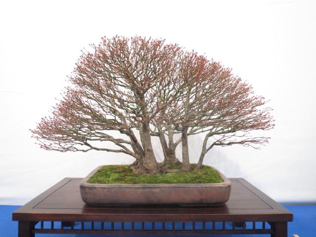 """Trees and details, that caught mye eye, at """"Noelanders"""" Img_1737"""
