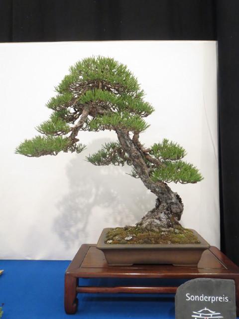 """Trees and details, that caught mye eye, at """"Noelanders"""" Img_1738"""