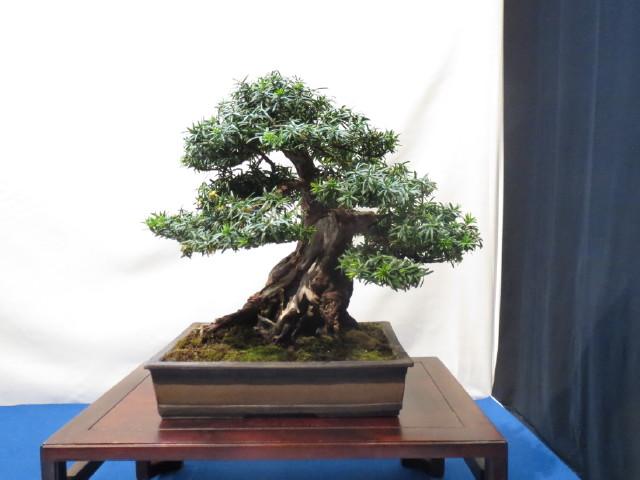 """Trees and details, that caught mye eye, at """"Noelanders"""" Img_1740"""