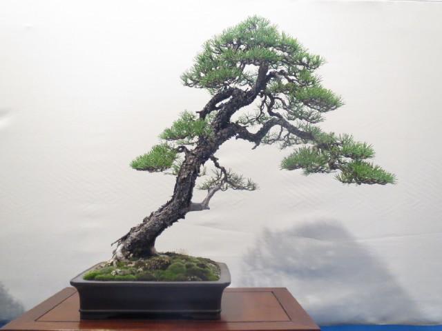 """Trees and details, that caught mye eye, at """"Noelanders"""" Img_1741"""