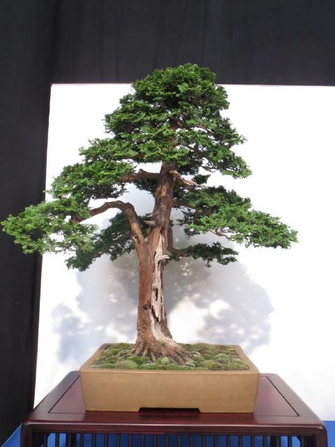 """Trees and details, that caught mye eye, at """"Noelanders"""" Img_1743"""