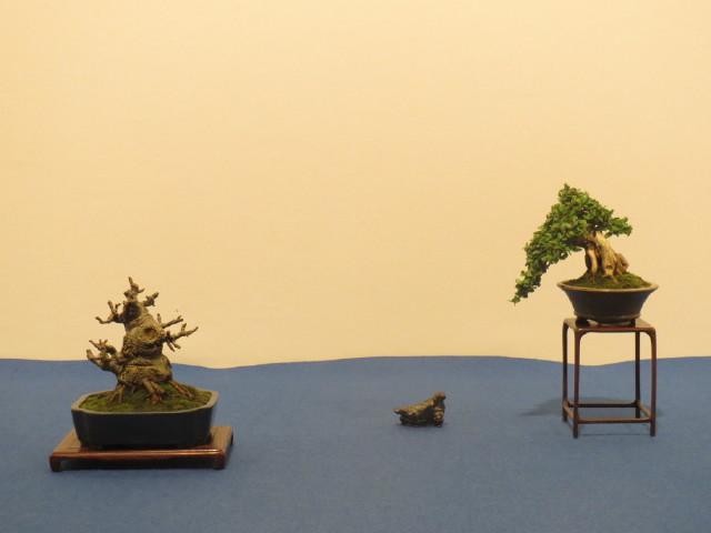 """Trees and details, that caught mye eye, at """"Noelanders"""" Img_1744"""