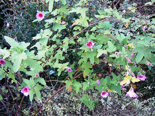 un ptit tour du jardin en janvier 1-abei11