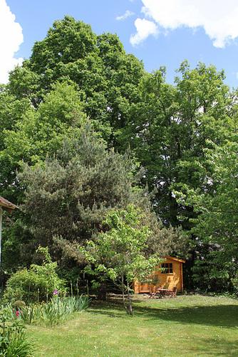 Quercus pedonculatus - chêne pédonculé 10neir15