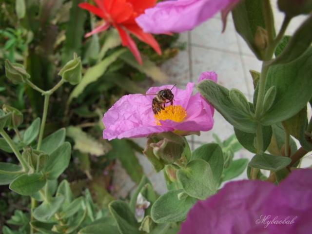 abeilles 112