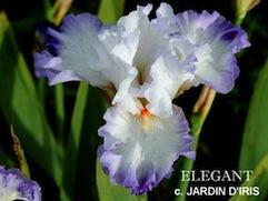 Iris 'Cerf Volant' - Richard Cayeux 2002 11eleg10