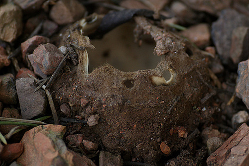 champignons étonnants 1512