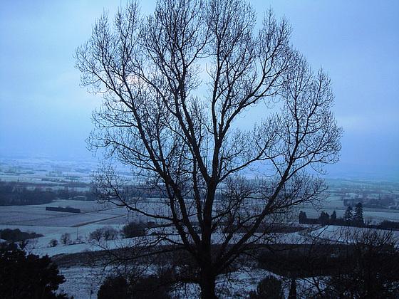 un arbre en hiver - participations 1ab11