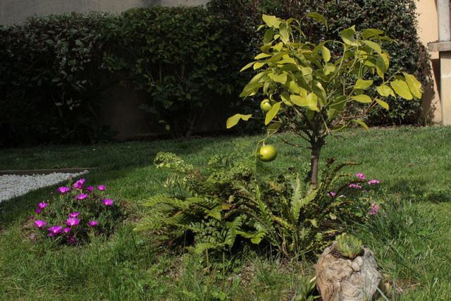 Essai de jardin 1dav10