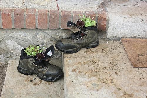 voilà ce qui arrive quand on ne range pas ses chaussures 1hima10