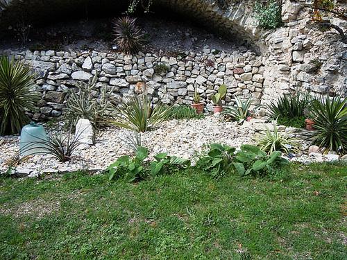 rusticité des cactus et succulentes en extérieur - listes 2-abei16