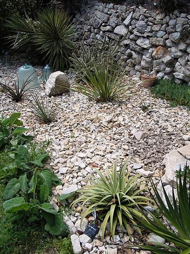 rusticité des cactus et succulentes en extérieur - listes 2-abei18