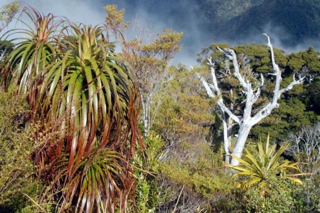 Plantes de fous ! forêts tempérées exotiques 2202