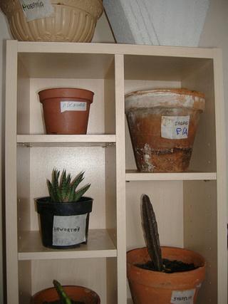 associer diverses succulentes 2237