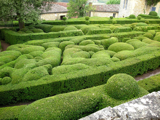 Buxus sempervirens - buis commun - Page 2 2413