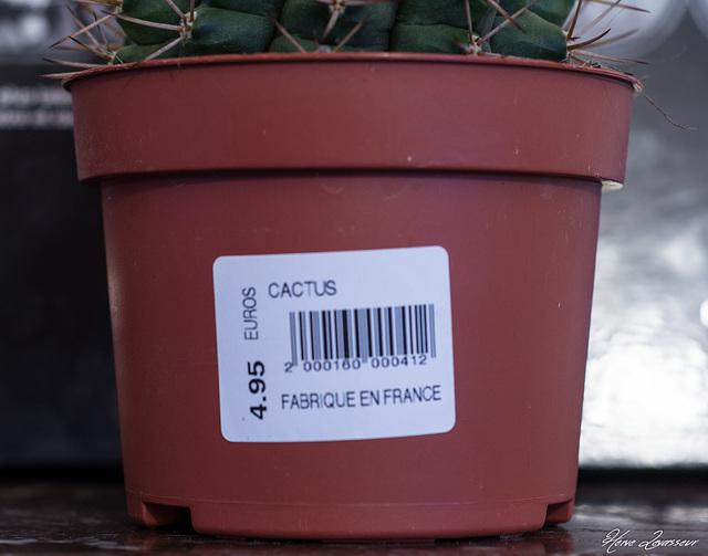 Gymnocalycium marsoneri ssp marsoneri ?  [identification à confirmer] 270