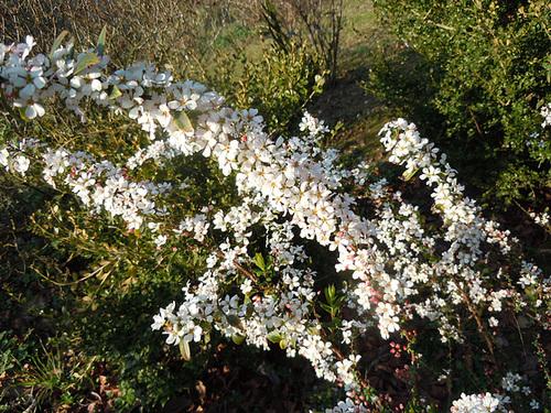 (26) Le Jardin des Sables - un arboretum de passionnés - Montvendres - Page 3 2_spir10