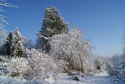 vos ambiances hivernales !!! c'est parti !! - Page 4 3-serg32