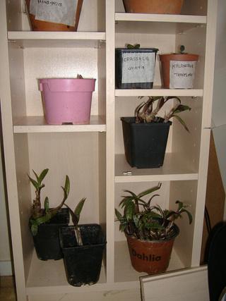 associer diverses succulentes 3158
