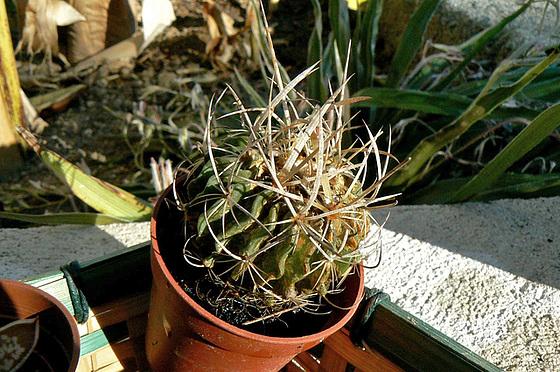 cactées & succulentes - id. non terminées 365