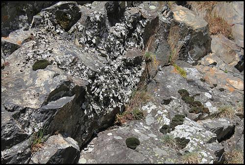 Anciennes coulées basaltiques  3_114