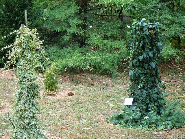(26) le jardin privé d'un collectionneur 3lierr10