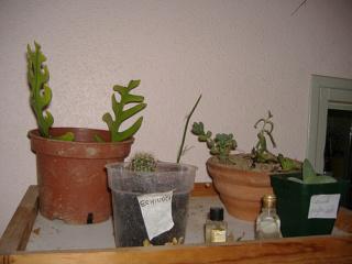 associer diverses succulentes 4bip11