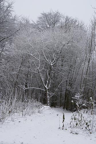 un arbre en hiver - résultats 4serg14