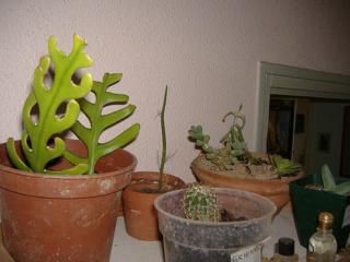 associer diverses succulentes 594