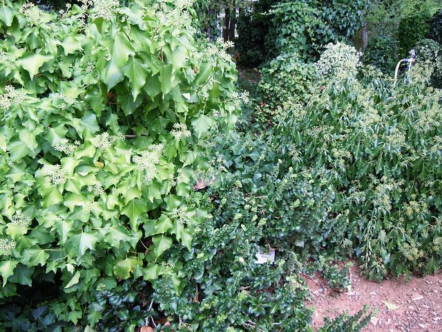 (26) le jardin privé d'un collectionneur 678