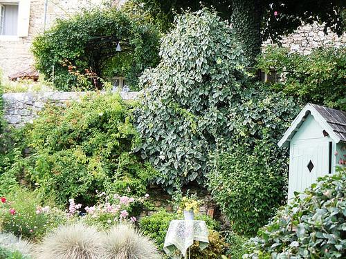 Salvia guaranitica 6_abei11