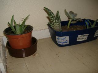 associer diverses succulentes 6bip11