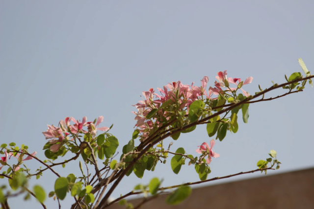 avril, jardin fébrile - Page 6 760