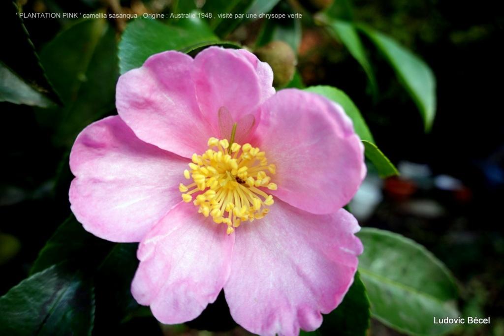 Brumes de fleurs - Page 3 77ludo10