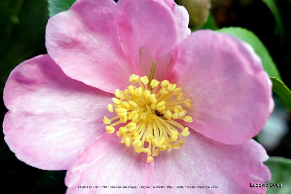 Brumes de fleurs - Page 3 7810