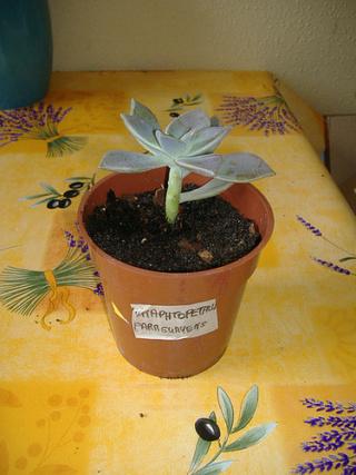 associer diverses succulentes 7bip_s10